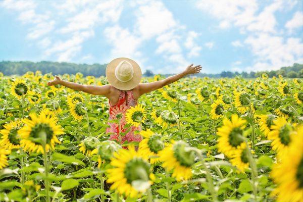 sunflowers 3640938 1920
