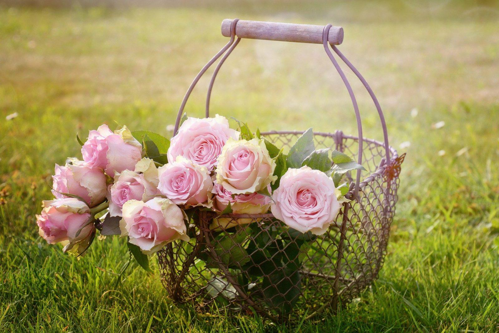 roses 1566792 1920