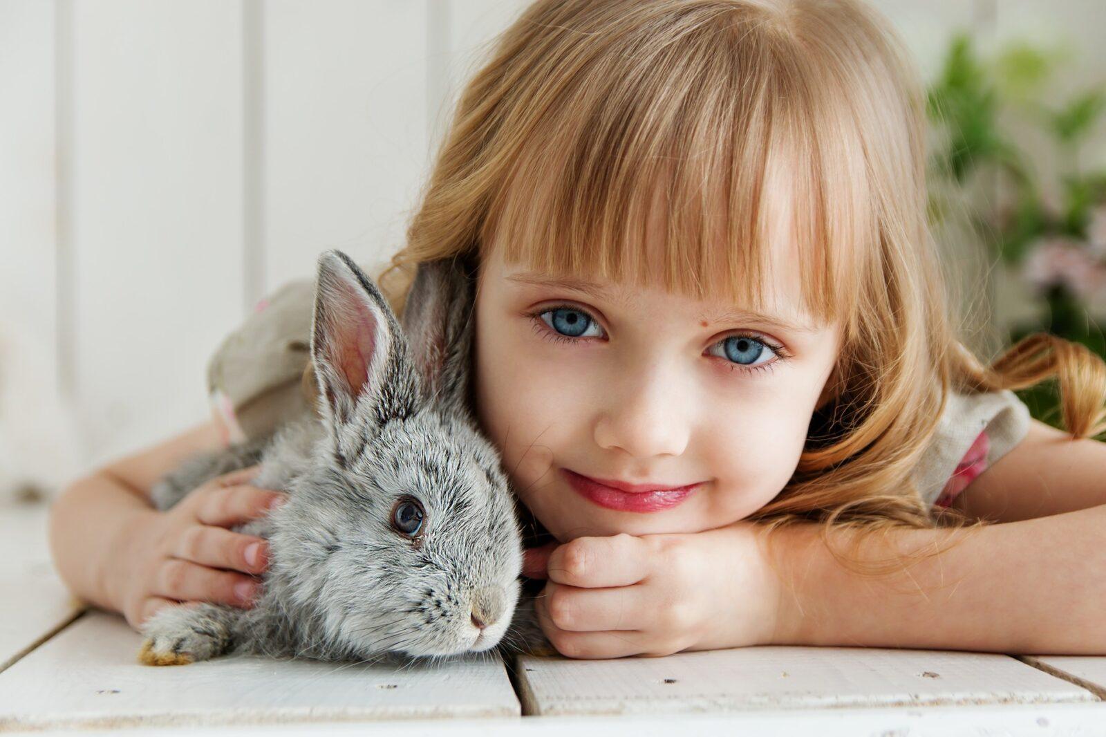 rabbit 3660673 1920
