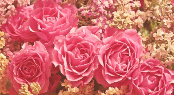 roses 3700010 1920